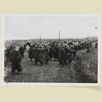 Polnische Kriegsgefangene nach der Schlacht bei Kock